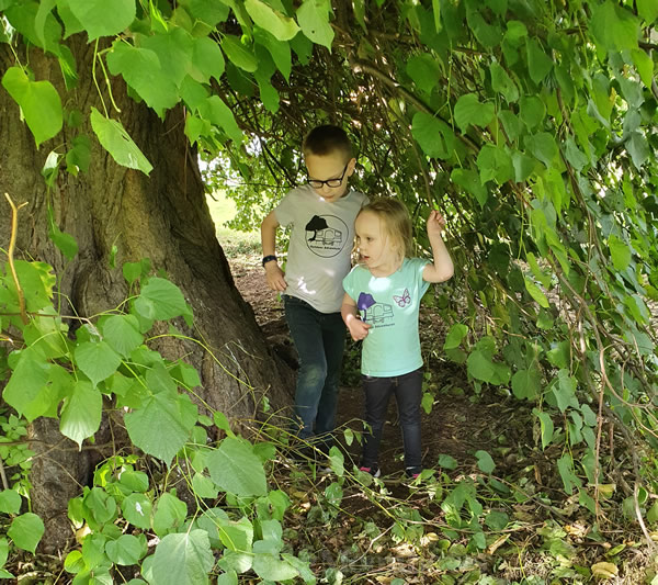 Playing in the big tree Belmont Camping
